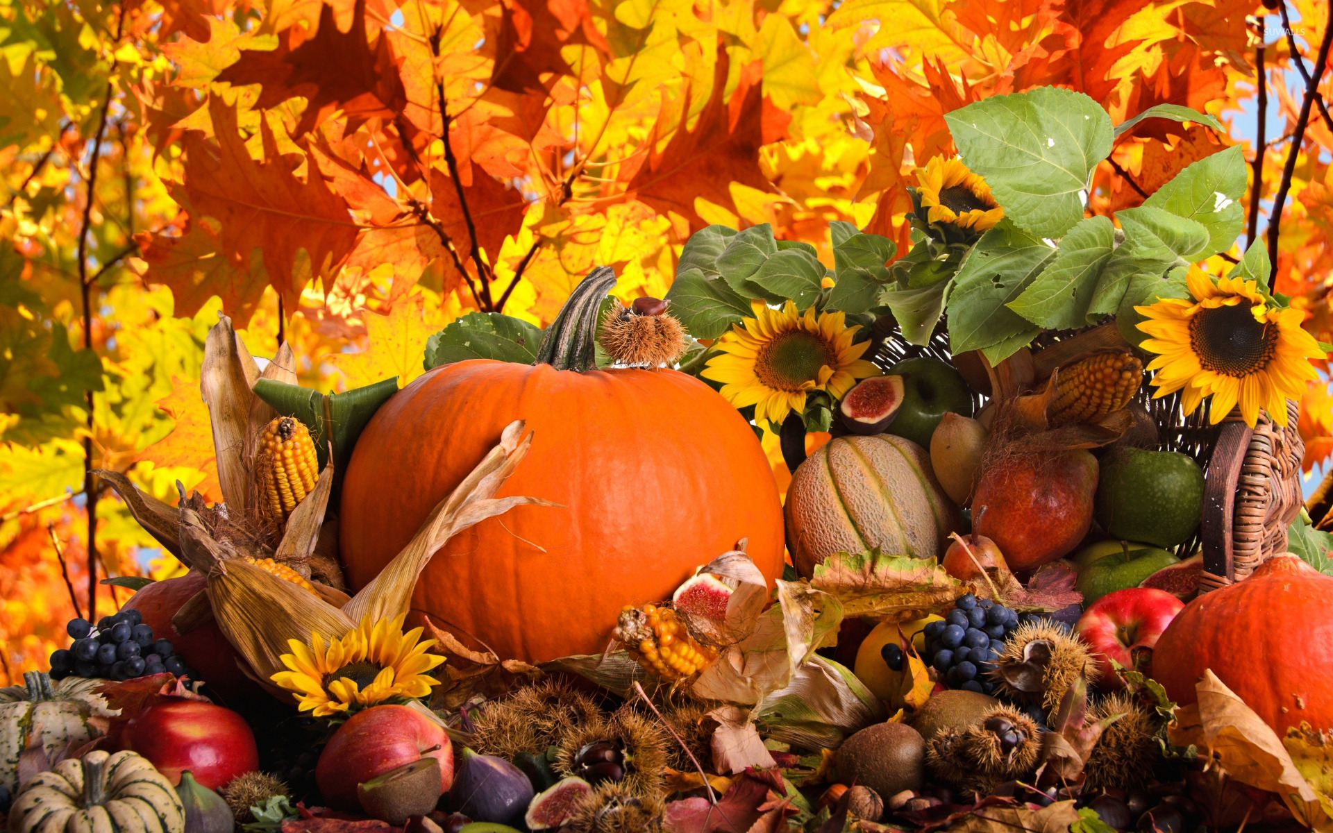 autumn-harvest-wallpaper-holiday-wallpapers-23575